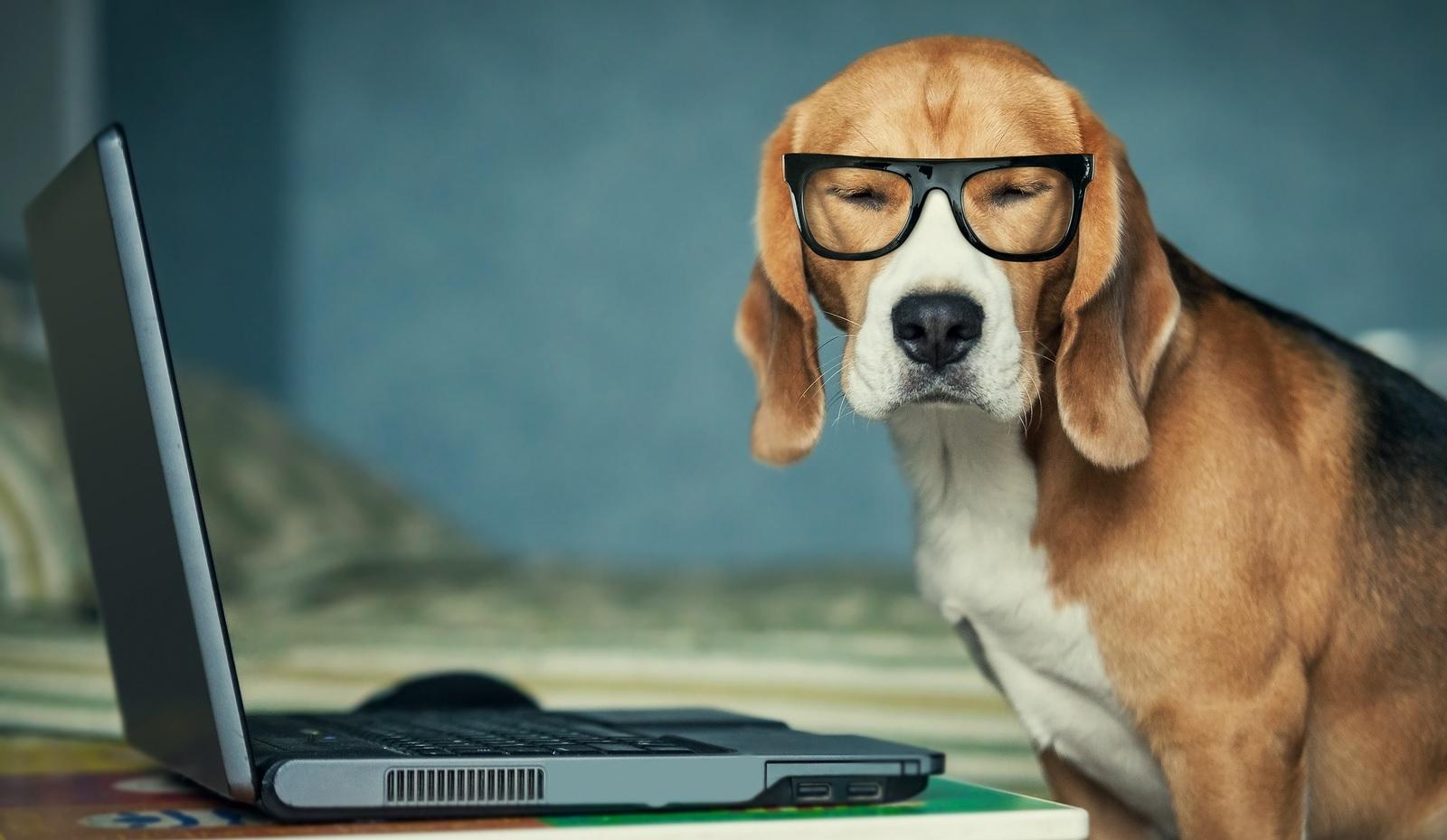 legal-dog